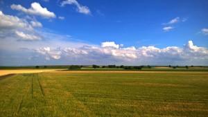 Sommer in Rheinhesse- Landschaftsaufnahme